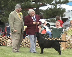 Castilleja Kennels - 2005 LOC Specialty